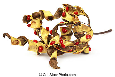 Sandalwood Seeds with dried bean