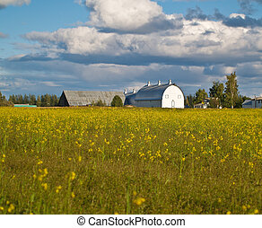 Fields and American barn - Fileds and American barn with...