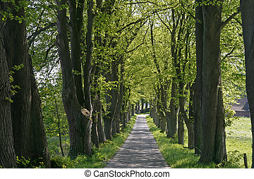 Alley with trees, Lower Saxony, Germany, Europe