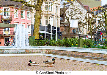 Ducks in Central Park with a fountain. Europe, Germany, Baden-Ba