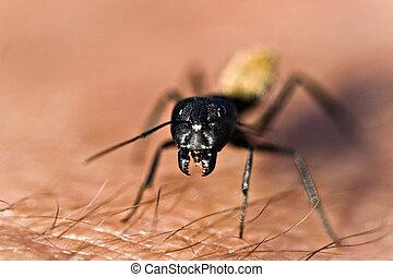 guerrero, termita