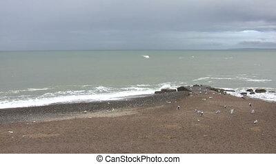 Beach, seagulls and waves - Seagulls on the west coast beach...
