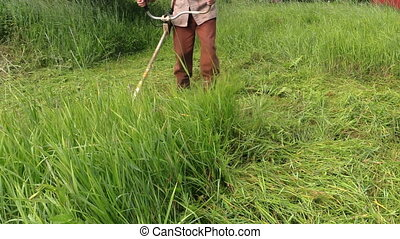 Peasant man cut grass