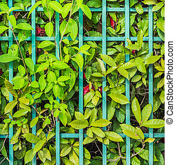 Old iron fence with green leaves background.