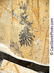Fossil design - botanical black fossil design over yellow...