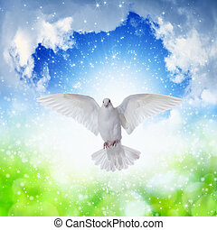 White dove flies in skies - Holy Spirit came down like white...