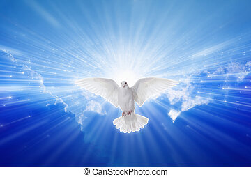 Holy Spirit came down like dove, holy spirit dove flies in...