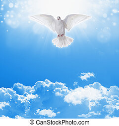 White dove in skies - Holy spirit dove flies in blue sky,...