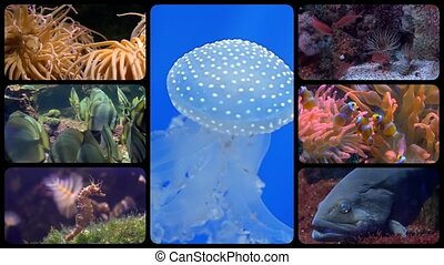 diverse fishes collage - a montage including diverse species...