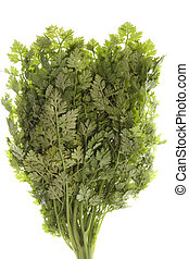 Chervil Leaves Isolated - Isolated image of Chervil herb...