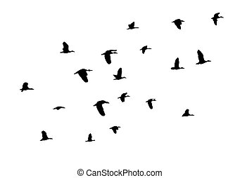 Birds Flying - vector birds flying