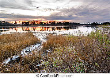 Natural Oyster Bed at Sunset - A natural oyster bed as seen...