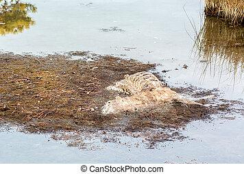 Rotting Deer Carcase - A rotting deer carcase in the...