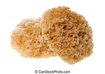 Edible White Fungus Isolated - Isolated image of edible...