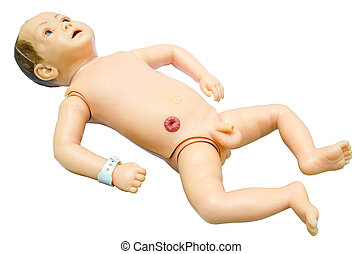 Baby anatomy. Training model for students studying medicine.