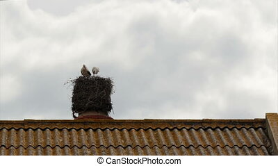Stork Chimmney Nest Still - Storks standing in nest on top...