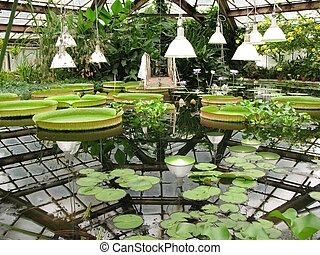 Water greenhouse of the Botanical Garden.