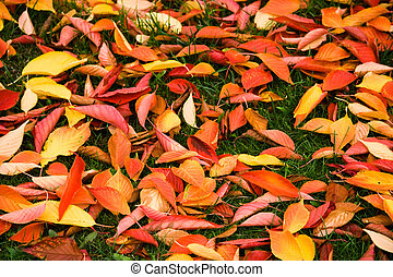 Background of fallen leaves - Cherry tree