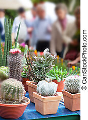 Audience at an exhibition of cactuses