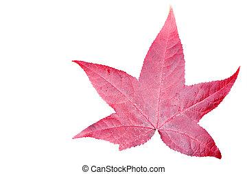Leaf isolated on white background. - Leaf isolated on white...