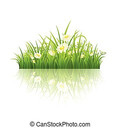 Green grass with daisies