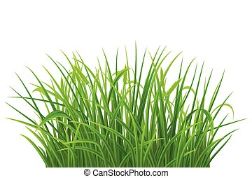 Green grass - Spring green grass on white background, vector...