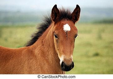 brown horse foal on field portrait