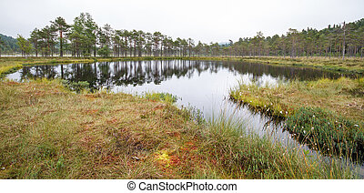 Swedish tarn - Small pond or tarn in Safsen, Sweden.