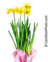 Yellow Flowers on white background close upSpring flowers or...