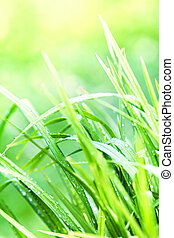 Green grass background macro. Abstract natural backgrounds with