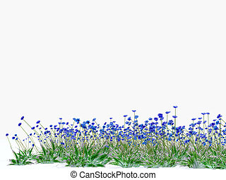 meadow full of blue cornflowers on white background