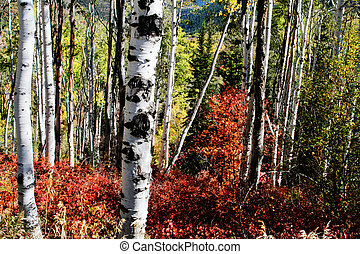 Rocky Mountain Fall - Mountain Meadow in the fall