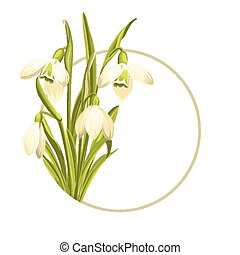 Snowdrop flowers. - Beautiful white snowdrop flowers for...