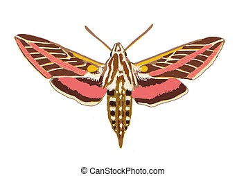 Sphinx Moth Arizona Computer Painting