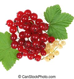 Currant fruit - Red and white currant fruit and green...