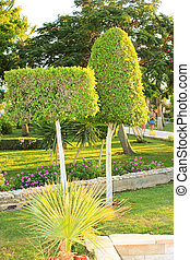 Trimmed Trees in the Park Ornamental Green Trees Nearly...
