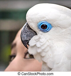 White parrot - Blue eye White parrot on top of a head