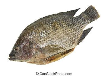 inteiro, Tilapia, peixe, isolado
