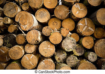 Tree Logs Stacked in a forest.
