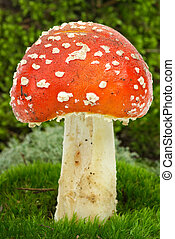 Fly agaric over the green moss