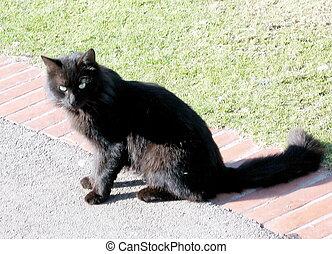 Ramat Gan Park Black Cat 2009 - Black Cat in Ramat Gan Park,...
