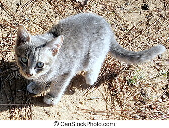 Ramat Gan Park cat 2007 - Young gray cat in Ramat Gan Park,...