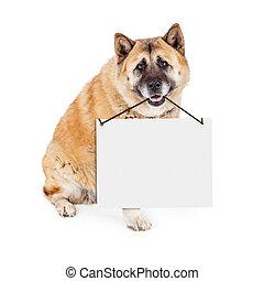 Akita Dog Carrying Blank Sign - A large Akita breed dog...