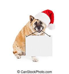 Akita Dog Wearing Santa Hat Carrying Blank Sign - A large...