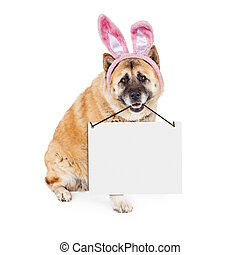Easter Bunny Akita Dog Carrying Blank Sign - A cute Akita...