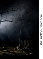 Mysterious Trees in a Haunted Forest With Mist