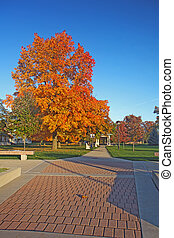 Brick walkway and fall foliage - Brick and concrete walkway...