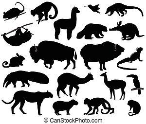 animais, de, norte, e, SUL, América,