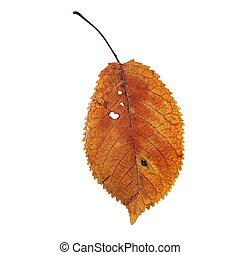 美しい, さくらんぼ, 薄れていった, 葉, 分離