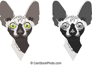 Sphynx cat - Two sphynx cats. The full-colored and the black...